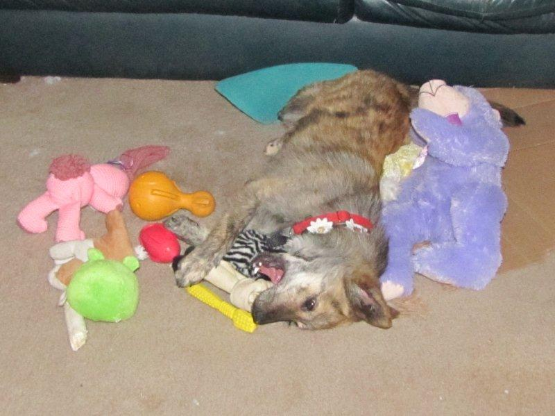 Relaxing with my toys after a busy day