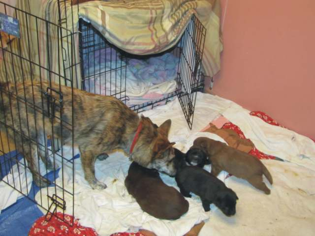 Inspecting the new puppies